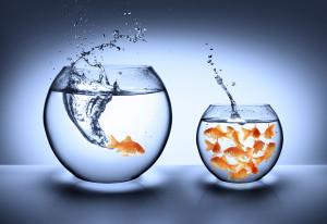 Fish Outta School